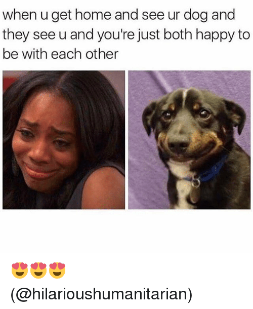 Memes, Happy, and Home: when u get home and see ur dog and  they see u and you're just both happy to  be with each other 😍😍😍 (@hilarioushumanitarian)