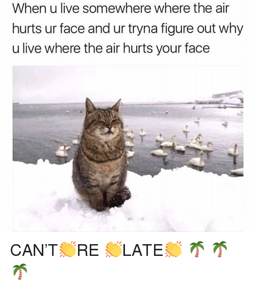 Memes, Live, and 🤖: When u live somewhere where the air  hurts ur face and ur tryna figure out why  u live where the air hurts your face CAN'T👏RE 👏LATE👏 🌴 🌴🌴
