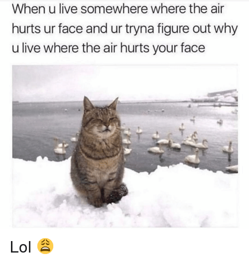 Funny, Lol, and Live: When u live somewhere where the air  hurts ur face and ur tryna figure out why  u live where the air hurts your face Lol 😩
