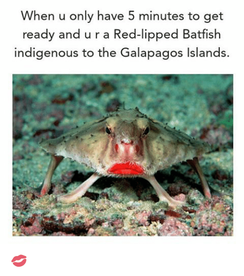 Red Lipped Batfish   When U Only Have 5 Minutes To Get Ready And U R A Red Lipped Batfish