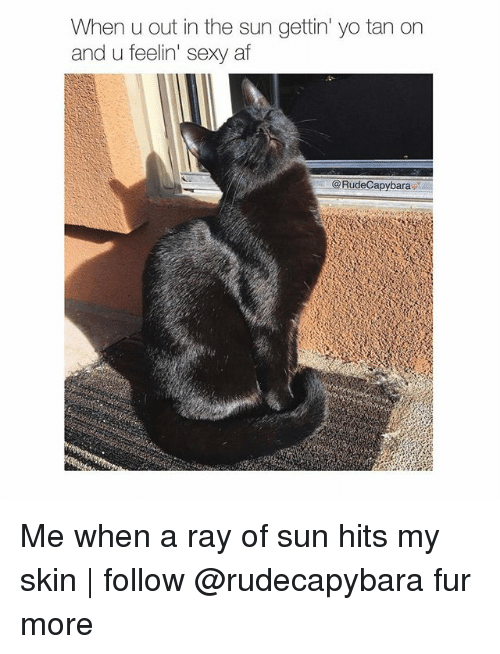 Af, Memes, and Sexy: When u out in the sun gettin' yo tan on  and u feelin' sexy af  @RudeCapybara Me when a ray of sun hits my skin | follow @rudecapybara fur more