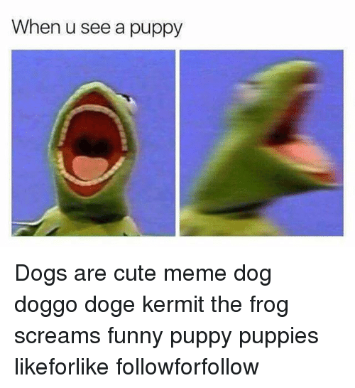 when u see a puppy dogs are cute meme dog 6617600 when u see a puppy dogs are cute meme dog doggo doge kermit the