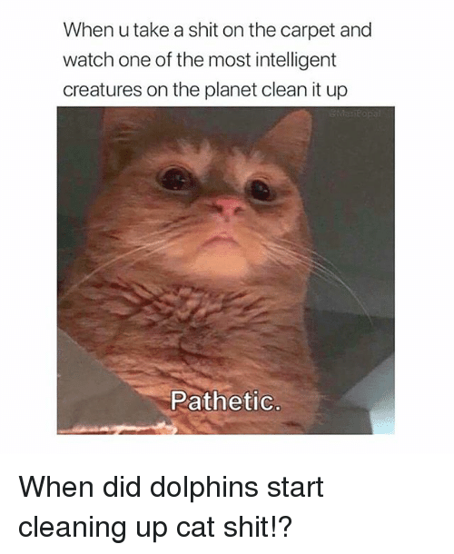 Memes, Shit, and Dolphins: When u take a shit on the carpet and  watch one of the most intelligent  creatures on the planet clean it up  Pathetic When did dolphins start cleaning up cat shit!?