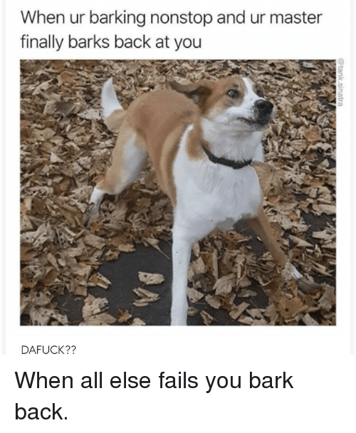 Back, Nonstop, and All: When ur barking nonstop and ur master  finally barks back at you  DAFUCK?? When all else fails you bark back.