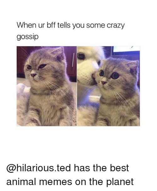 Crazy Memes And Ted When Ur Bff Tells You Some Crazy Gossip Hilarious Ted Has The Best Animal