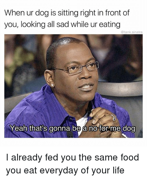 Food, Funny, and Life: When ur dog is sitting right in front of  you, looking all sad while ur eating  @tank.sinatra  Yeah that's gonna be a no for me dog I already fed you the same food you eat everyday of your life