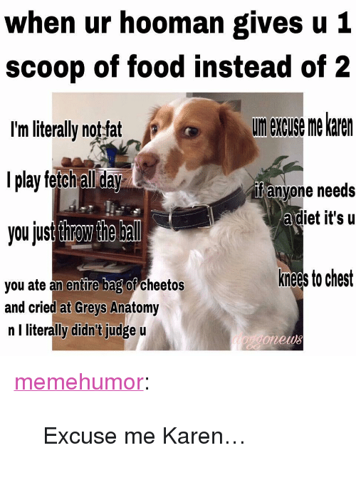 "Cheetos, Food, and Tumblr: when ur hooman gives u 1  scoop of food instead of 2  I'm literally notfat  l play fetch all day  you jusr throw the bal  urn excuse me karen  if anyone needs  adiet it's u  knees to chest  you ate an entire bag or cheetos  and cried at Greys Anatomy  n I literally didn't judge u  onews <p><a href=""http://memehumor.net/post/163943837418/excuse-me-karen"" class=""tumblr_blog"">memehumor</a>:</p>  <blockquote><p>Excuse me Karen…</p></blockquote>"