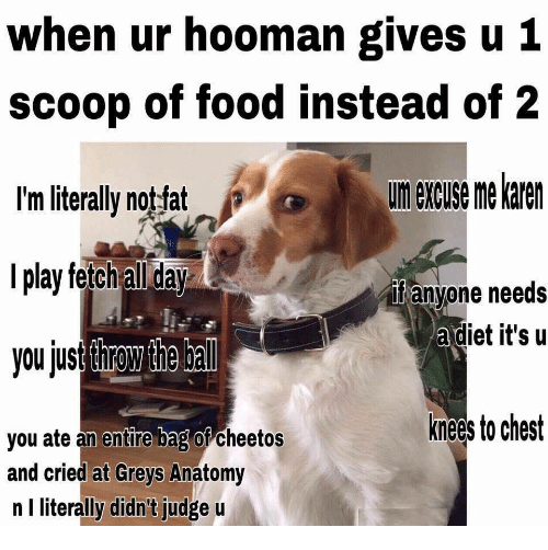 Cheetos, Food, and Grey's Anatomy: when ur hooman gives u 1  scoop of food instead of 2  I'm literally notfat  l play fetch all day  you just throw the bal  un excuse me karen  if anyone needs  adiet it's u  the ba  knees to chest  you ate an entire bag of cheetos  and cried at Greys Anatomy  n I literally didn't judge u