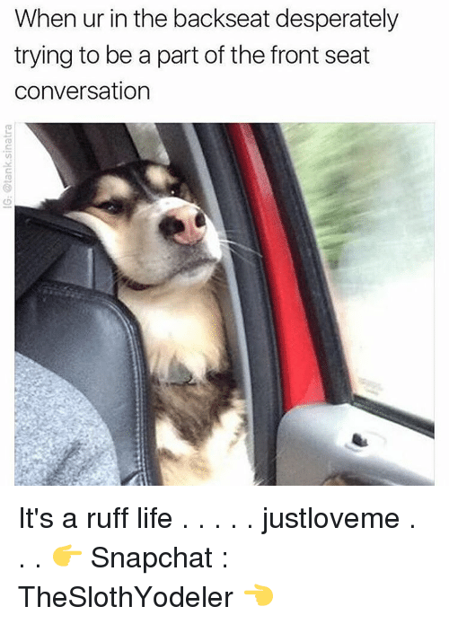 Desperate, Memes, and Snapchat: When ur in the backseat desperately  trying to be a part of the front seat  conversation It's a ruff life . . . . . justloveme . . . 👉 Snapchat : TheSlothYodeler 👈