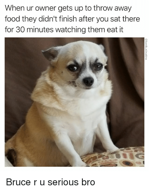 when ur owner gets up to throw away food they 24927507 ✅ 25 best memes about r u serious r u serious memes