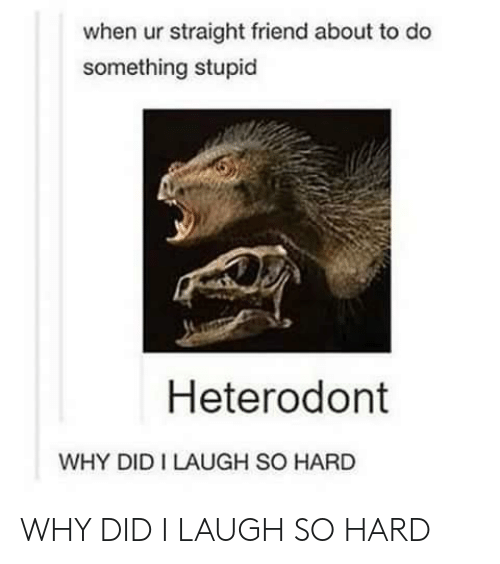Friend, Why, and Did: when ur straight friend about to do  something stupid  Heterodont  WHY DID I LAUGH SO HARD WHY DID I LAUGH SO HARD