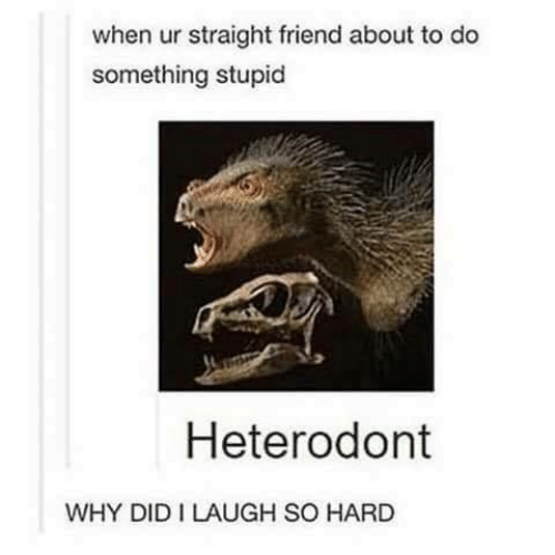 Friend, Why, and Did: when ur straight friend about to do  something stupid  Heterodont  WHY DID I LAUGH SO HARD