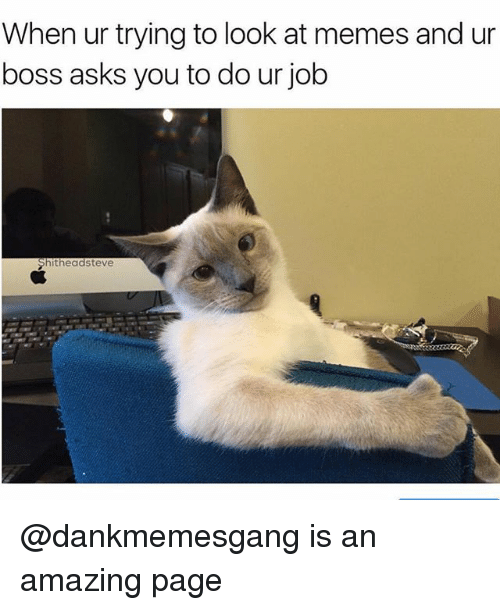 Memes, Dank Memes, and Amazing: When ur trying to look at memes and ur  boss asks you to do ur job  Shitheadsteve @dankmemesgang is an amazing page
