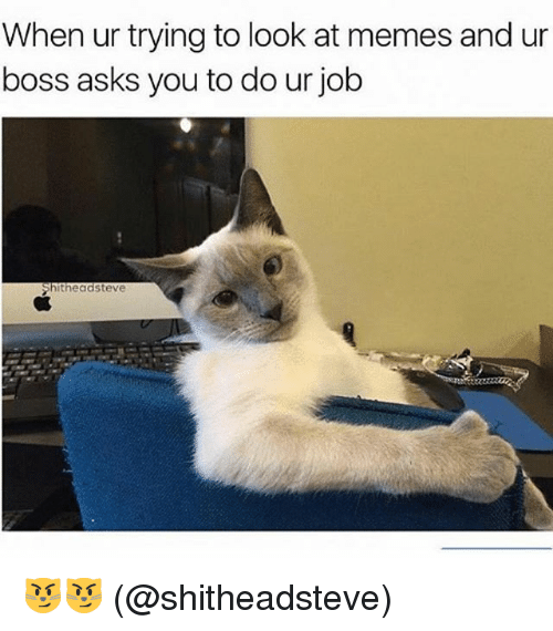 Memes, Asks, and 🤖: When ur trying to look at memes and ur  boss asks you to do ur job  Shitheadsteve 😼😼 (@shitheadsteve)