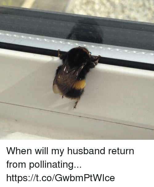Relatable, Husband, and Will: When will my husband return from pollinating... https://t.co/GwbmPtWIce