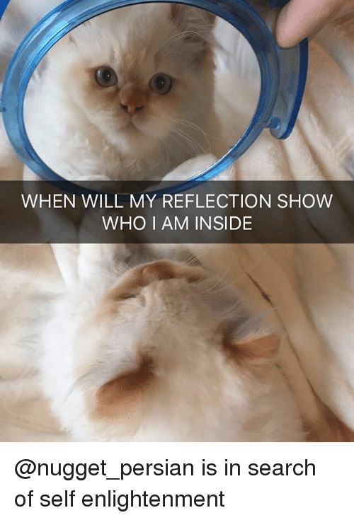 Memes, Search, and Persian: WHEN WILL MY REFLECTION SHOW  WHO I AM INSIDE @nugget_persian is in search of self enlightenment