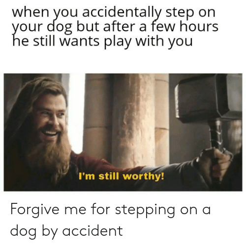Dog, Step, and Play: when you accidentally step on  our dog but after a few hours  e still wants play with you  I'm still worthy! Forgive me for stepping on a dog by accident