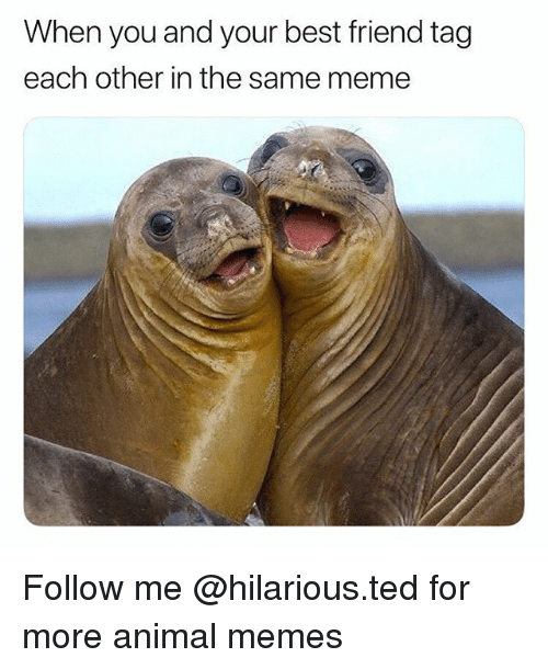 When You And Your Best Friend Tag Each Other In The Same Meme Follow