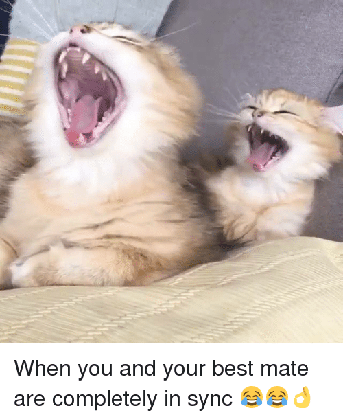 Dank, 🤖, and Mate: When you and your best mate are completely in sync 😂😂👌