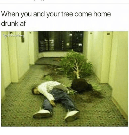 when you and your tree come home drunk af 18691007 when you and your tree come home drunk af af meme on me me