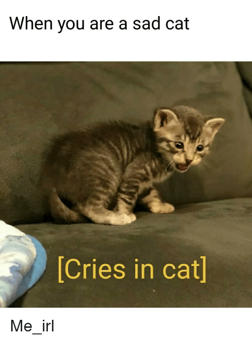 Sad, Irl, and Me IRL: When you are a sad cat  Cries in cat