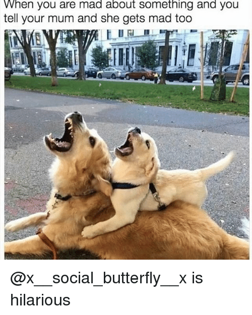 Funny, Butterfly, and Hilarious: When you are mad about something and you  tell your mum and she gets mad too @x__social_butterfly__x is hilarious