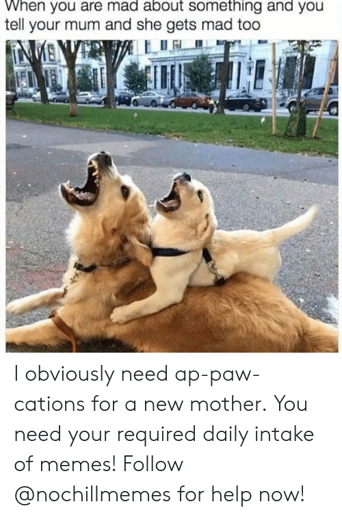 Memes, Help, and Mad: When you are mad about something and you  tell your mum and she gets mad too  NMENVE I obviously need ap-paw-cations for a new mother.  You need your required daily intake of memes! Follow @nochillmemes for help now!