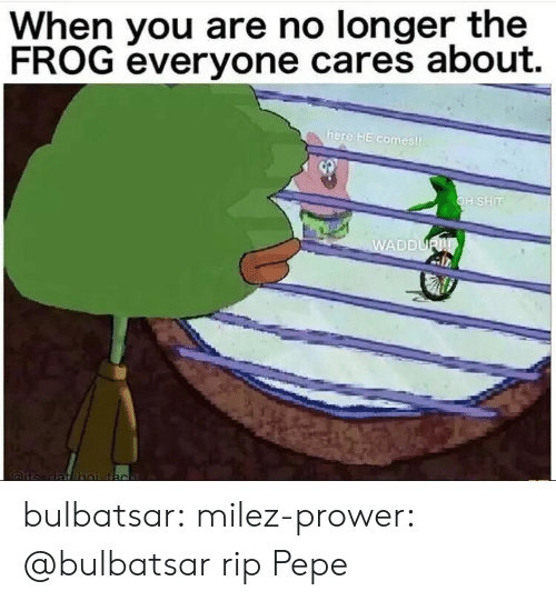 Shit, Tumblr, and Blog: When you are no longer the  FROG everyone cares about.  here HE comes  H SHIT  DDU bulbatsar:  milez-prower:  @bulbatsar  rip Pepe
