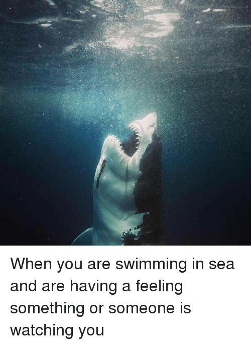 Funny, Swimming, and You: When you are swimming in sea and are having a feeling something or someone is watching you