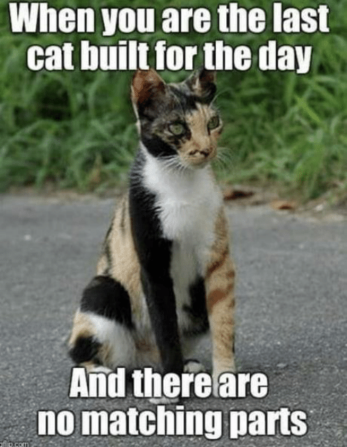 Dank, 🤖, and Cat: When you are the last  cat built for the day  And there are  no matching parts  fip.com