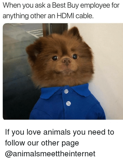 Animals, Best Buy, and Love: When you ask a Best Buy employee for  anything other an HDMI cable. If you love animals you need to follow our other page @animalsmeettheinternet