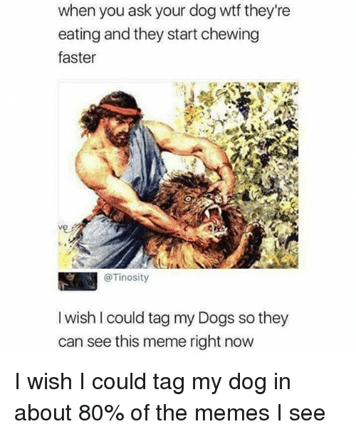 Dogs, Meme, and Memes: when you ask your dog wtf they're  eating and they start chewing  faster  @Tinosity  I wish l could tag my Dogs so they  can see this meme right now I wish I could tag my dog in about 80% of the memes I see