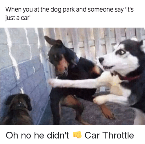 when you at the dog park and someone say its 6090466 when you at the dog park and someone say 'it's just a car oh no he