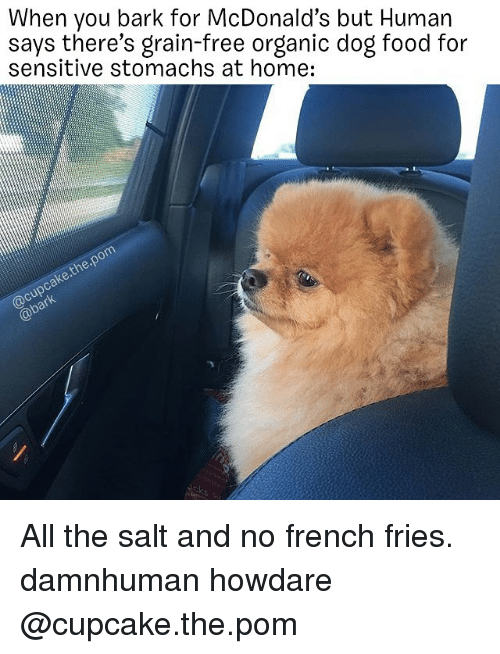 Food, McDonalds, and Memes: When you bark for McDonald's but Human  says there's grain-free organic dog food for  sensitive stomachs at home:  @cupcake.the.pom  @bark All the salt and no french fries. damnhuman howdare @cupcake.the.pom