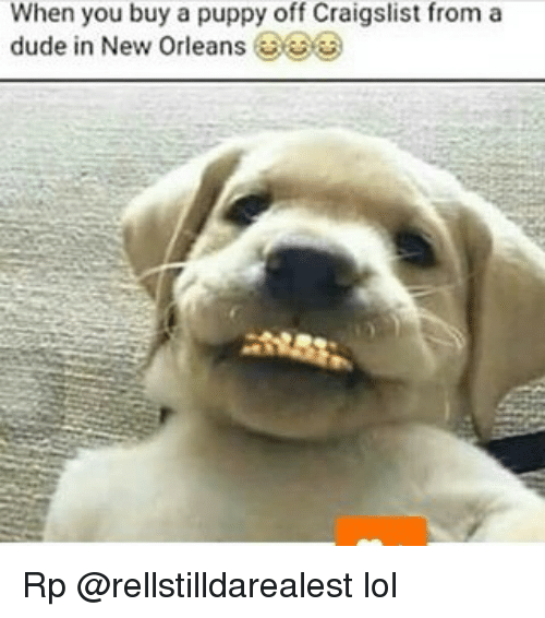 When You Buy A Puppy Off Craigslist From A Dude In New Orleans Rp