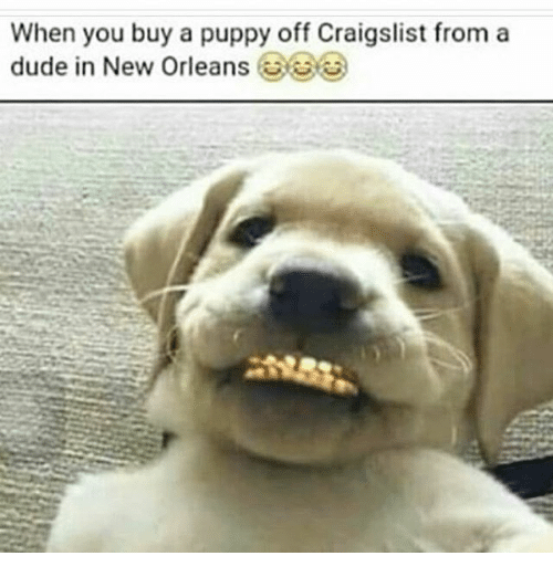 When You Buy A Puppy Off Craigslist From A Dude In New Orleans