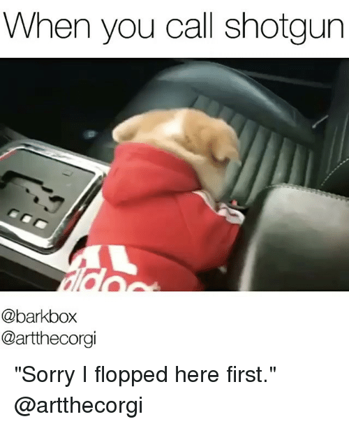 "Memes, 🤖, and Shotgun: When you call shotgun  @barkbox  Cartthecorgi ""Sorry I flopped here first."" @artthecorgi"