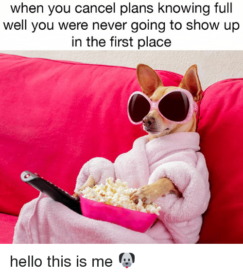 Hello, Relatable, and Never: when you cancel plans knowing full  well you were never going to show up  in the first place hello this is me 🐶