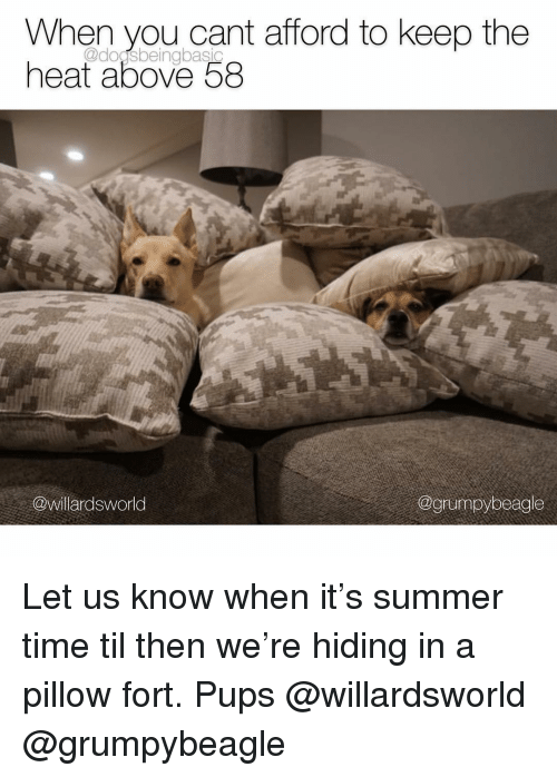 Memes, Summer, and Heat: When you cant afford to keep the  heat above 58  @dogsbeingbasic  @willardsworld  @grumpybeagle Let us know when it's summer time til then we're hiding in a pillow fort. Pups @willardsworld @grumpybeagle