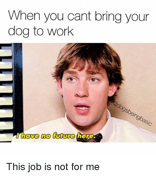 Future, Memes, and Work: When you cant bring your  dog to work  have no future  here This job is not for me