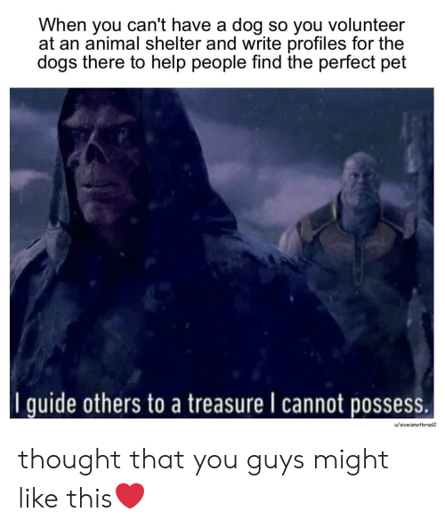 Dogs, Animal, and Animal Shelter: When you can't have a dog so you volunteer  at an animal shelter and write profiles for the  dogs there to help people find the perfect pet  I quide others to a treasure I cannot possess.  u/siveisnotbrad2 thought that you guys might like this❤️