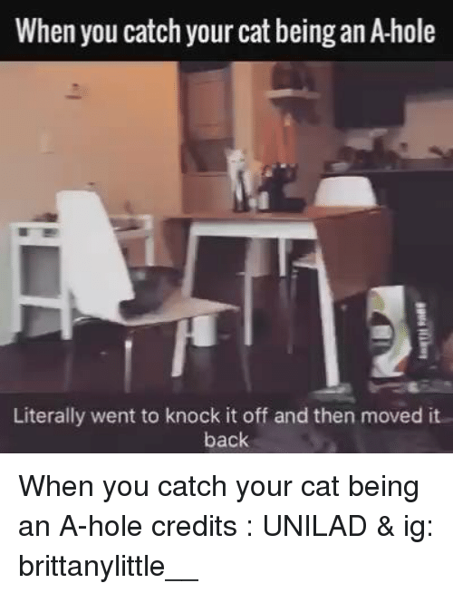 Video Cat Literally Knock It Off Back
