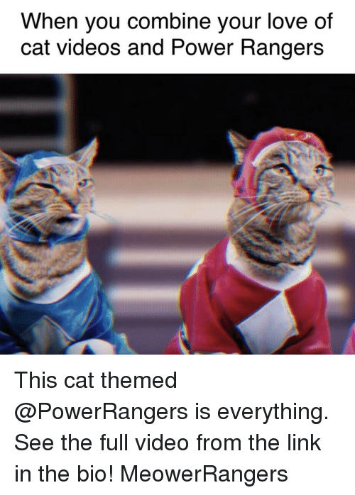 Power Rangers, Rangers, and Girl Memes: When you combine your love of  Cat Videos and PoWer Rangers This cat themed @PowerRangers is everything. See the full video from the link in the bio! MeowerRangers