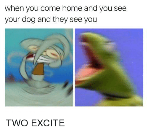 Memes, Excite, and Home: when you come home and you see  your dog and they see you TWO EXCITE