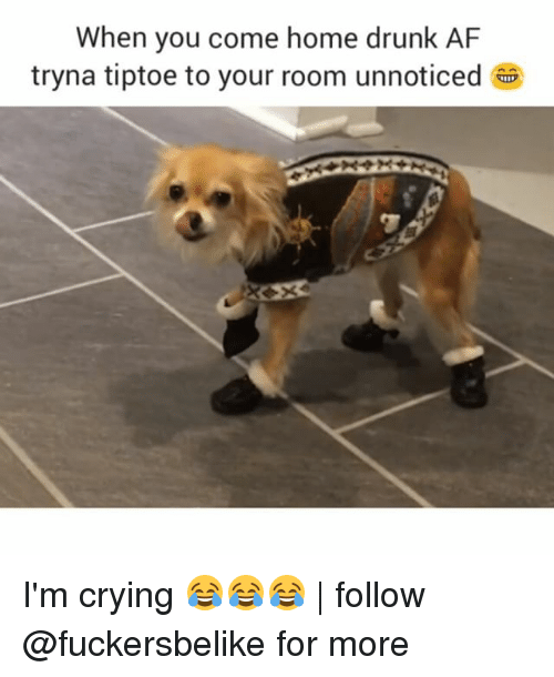 when you come home drunk af tryna tiptoe to your 8829574 ✅ 25 best memes about dog humor dog humor memes