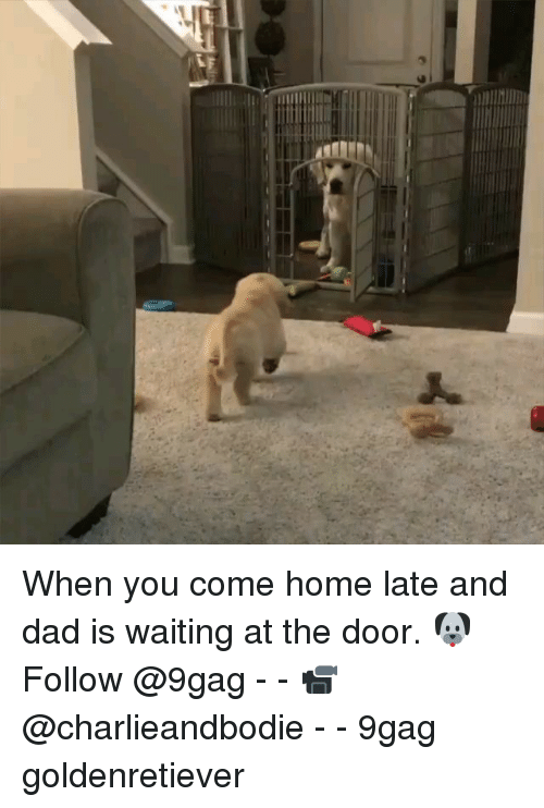 9gag, Dad, and Memes: When you come home late and dad is waiting at the door. 🐶Follow @9gag - - 📹@charlieandbodie - - 9gag goldenretiever