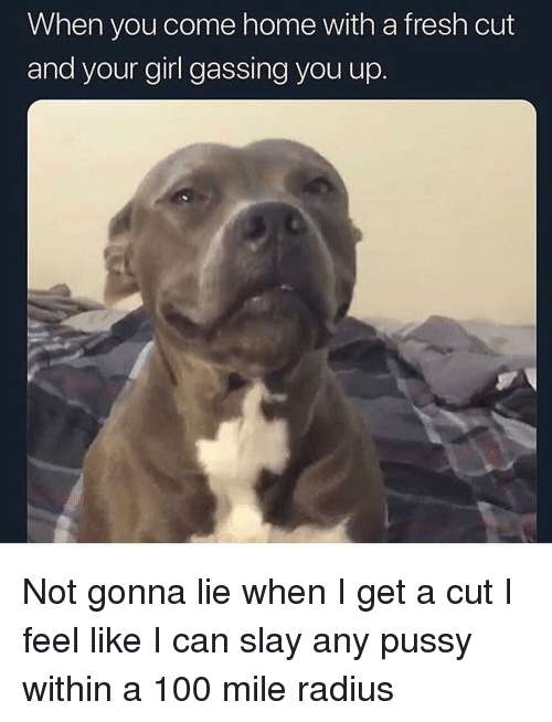 Anaconda, Fresh, and Funny: When you come home with a fresh cut  and your girl gassing you up Not gonna lie when I get a cut I feel like I can slay any pussy within a 100 mile radius