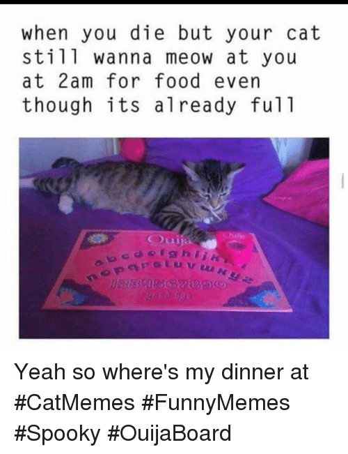 Food, Yeah, and Spooky: when you die but your cat  still wanna meow at you  at 2am for food evern  though its already ful1 Yeah so where's my dinner at #CatMemes #FunnyMemes #Spooky #OuijaBoard