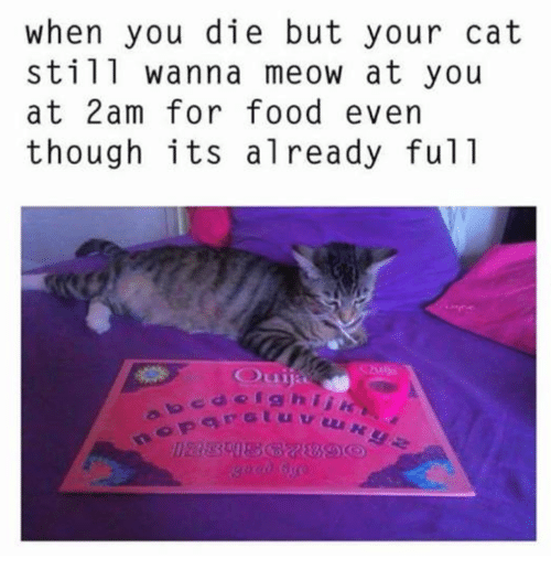Food, Memes, and 🤖: when you die but your cat  still wanna meow at you  at 2am for food even  though its already ful1