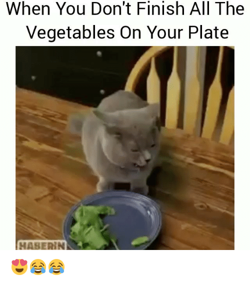 Funny, All The, and All: When You Don't Finish All The  Vegetables On Your Plate  HASERIN 😍😂😂